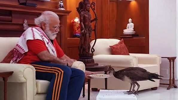 PM feeds grains to national bird, captures many hearts