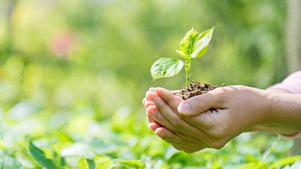 पर्यावरण संवर्धनाचा जागरासाठी रोपवाटिका निर्मितीचे लक्ष्य