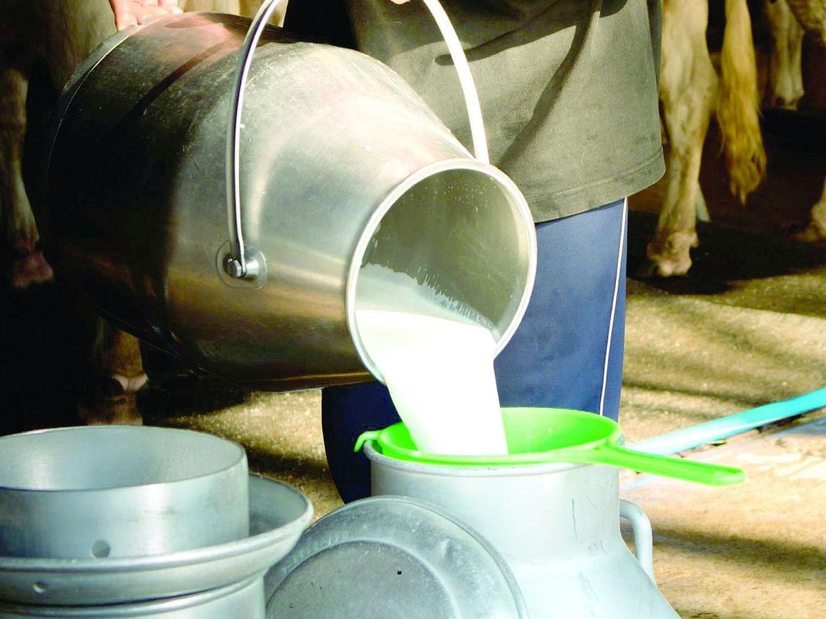 राज्य शासनाने दूध उत्पादकांना अर्थसहाय्य करावे - अनिल घनवट
