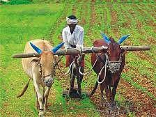 जिल्ह्यातील मंत्री व सत्ताधारी खासदारांचे शेतकरी प्रश्नाकडे दुर्लक्ष - जालिंदर निर्मळ