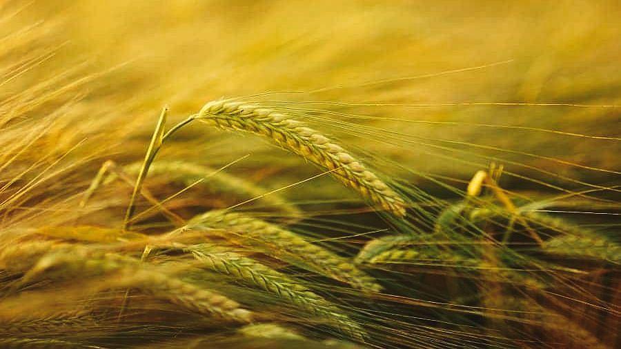 आत्मनिर्भर भारत आणि भारतीय शेती