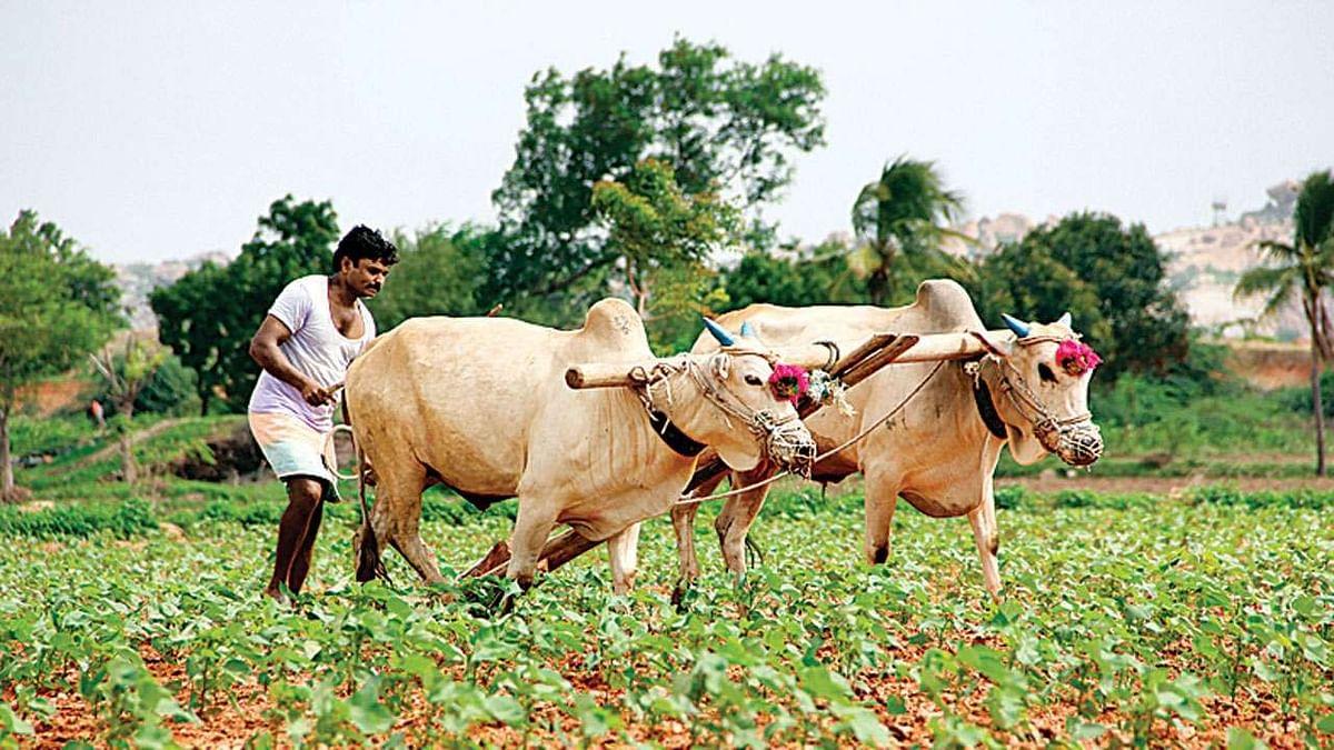 आत्महत्याग्रस्त शेतकऱ्यांचे मृतदेह उचलू देणार नाही
