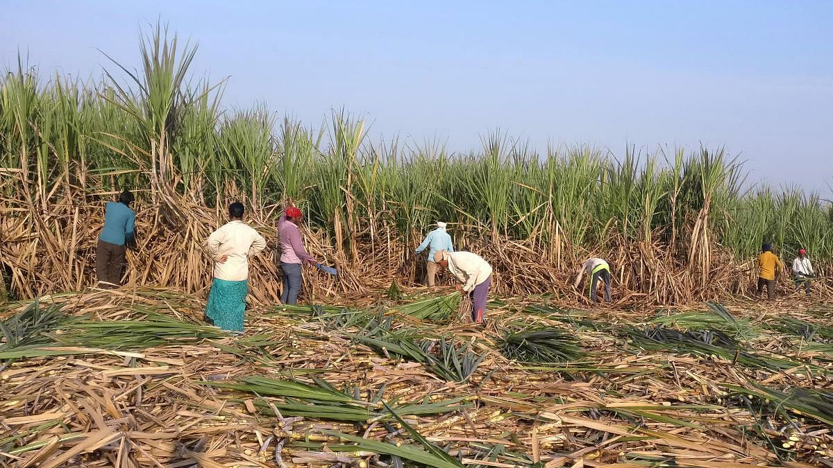 Sugarcane workers demand to extend agreement