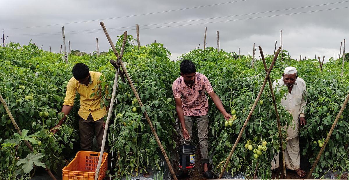 शेतीतील समृद्धीची सत्तापतींना जाणीव