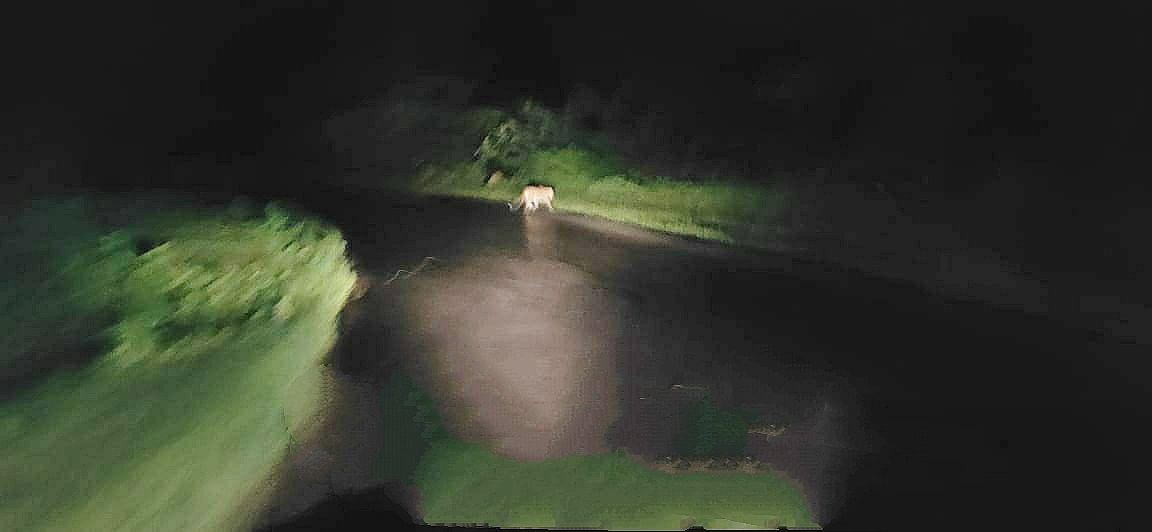 त्र्यंबकेश्वर : हरसूल-वाघेरा घाटात बिबट्याचे दर्शन