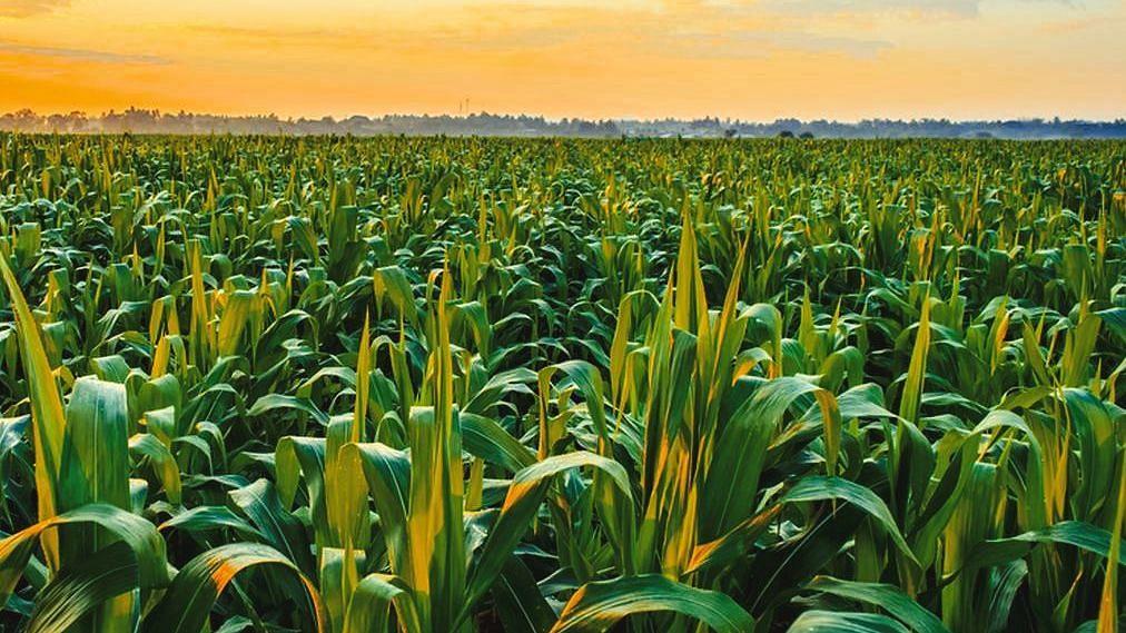 आंतरराष्ट्रीय व्यापार आणि कृषी अर्थव्यवस्था