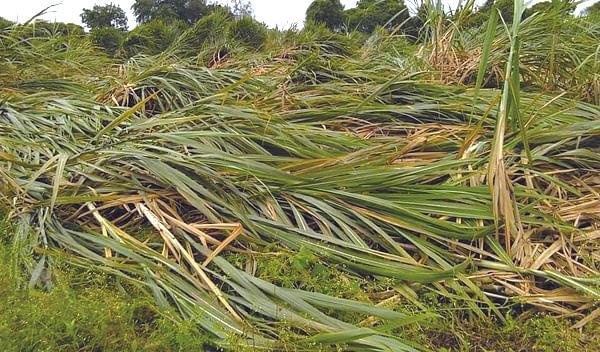 वादळी वारा व पावसामुळे झालेल्या पिकांच्या नुकसानीचे पंचनामे करा : आ. कानडे