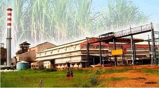 साखर कारखाना