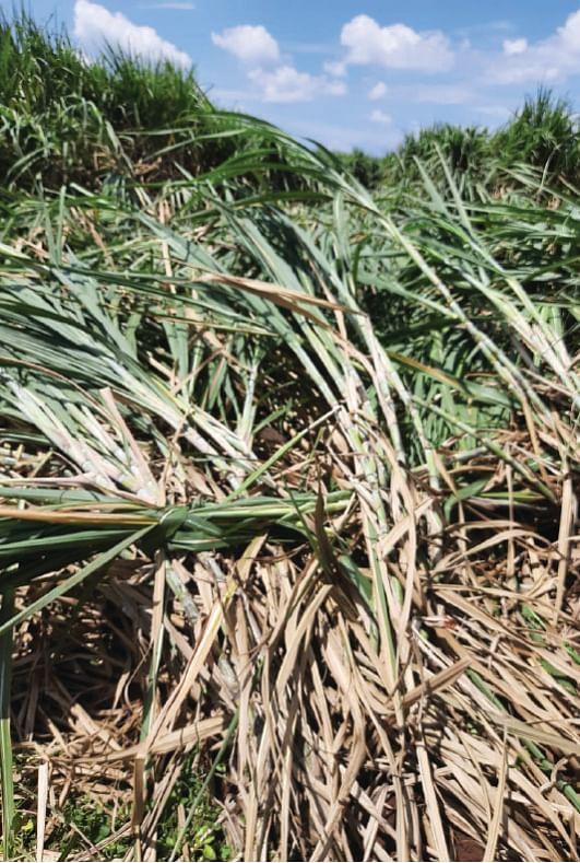 वादळी पावसाने तेलकुडगाव परिसरात केळीची झाडे पडली
