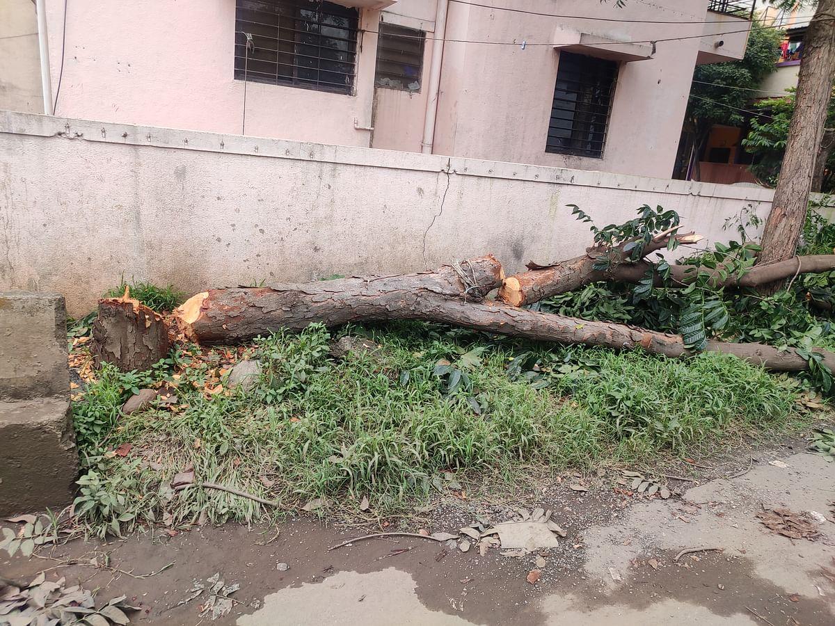 अखेर 'तो' वृक्ष तोडणाऱ्यावर गुन्हा दाखल