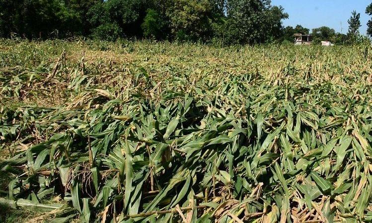 अतिवृष्टीमुळे नुकसान झालेल्या शेतकर्यांना नुकसान भरपाई द्या