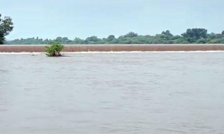 Video गिरणा नदीला पूर : सावदे येथील केटीवेअर ओसंडून वाहू लागला