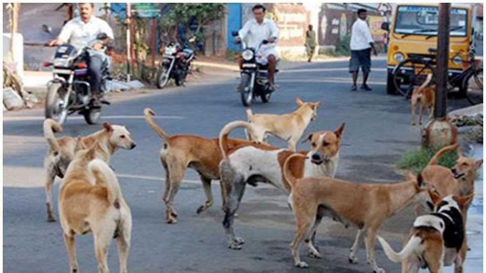 नगर : शहरातील मोकाट कुत्र्यांचा होणार बंदोबस्त !