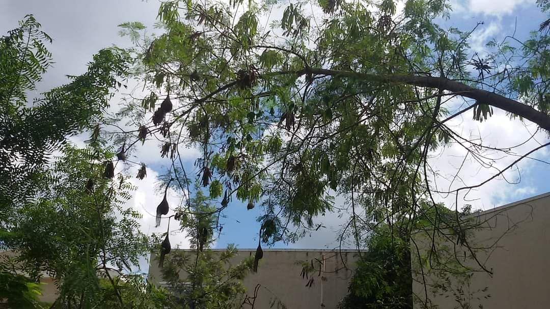 पक्ष्यांचा विणीचा कालखंड म्हणजे नेमकं काय?