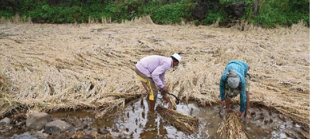 अवकाळी पावसाने आदिवासी पट्ट्यातील शेतकरी देशोधडीला