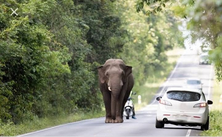 Wildlife Week : Govt to design safe roads for wildlife,  people