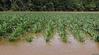 ऑक्टोबरमधील अतिवृष्टीचा शेतकर्यांना 156 कोटींचा फटका