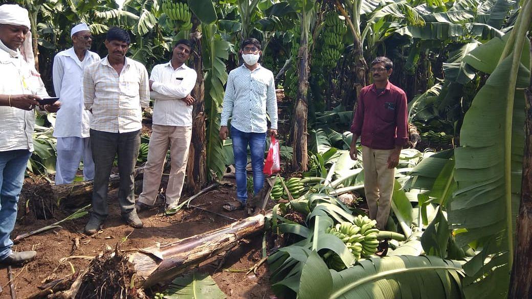 सोसाट्याच्या वाऱ्यामुळे पिकांचे नुकसान