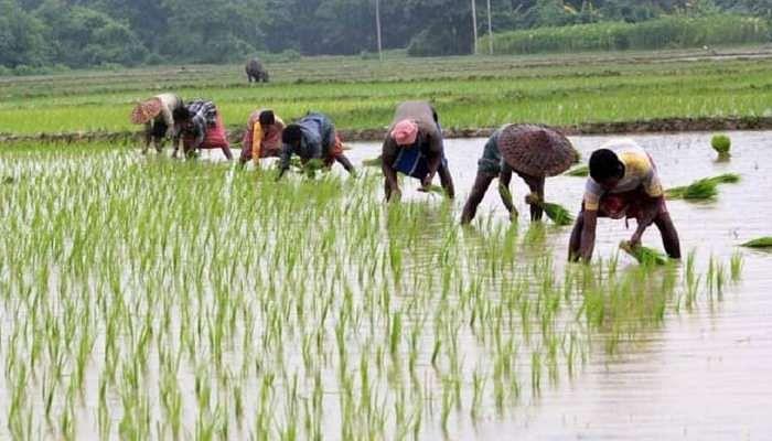 कृषी विधेयक शेतकऱ्यांना तारक की मारक?