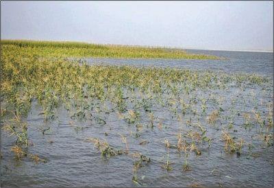 पाचेगावच्या शेतकर्यांनी पीक नुकसानीचे पंचनामे थांबवले