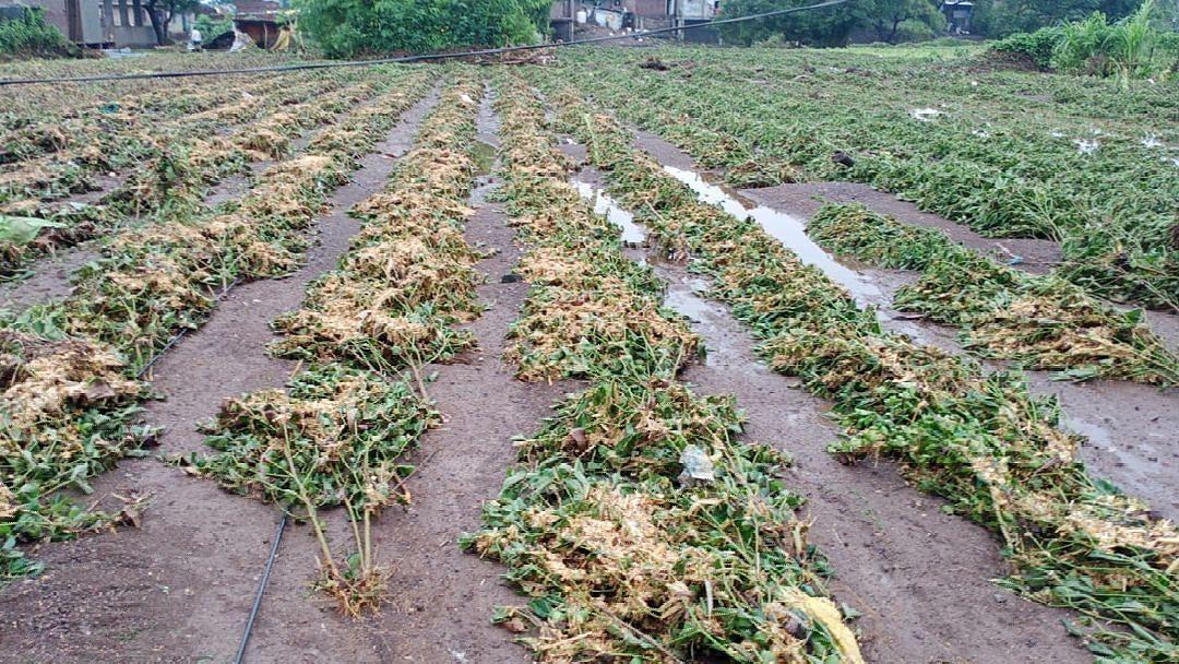 गारपिटग्रस्त शेती पिकांना 25 हजार तर फळबागांना 50 हजारांची भरपाई द्या