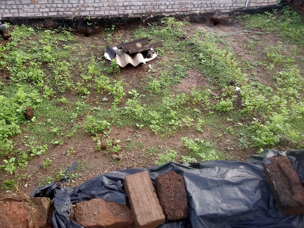 सिन्नर : 'दिलखुश'ची किमया..! चक्क घराच्या छतावर कोथिंबीरीची लागवड