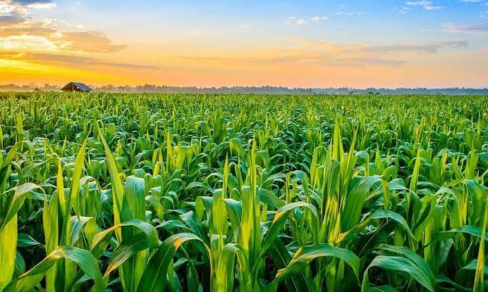 लोकसंख्या वाढ आणि कृषी विकास