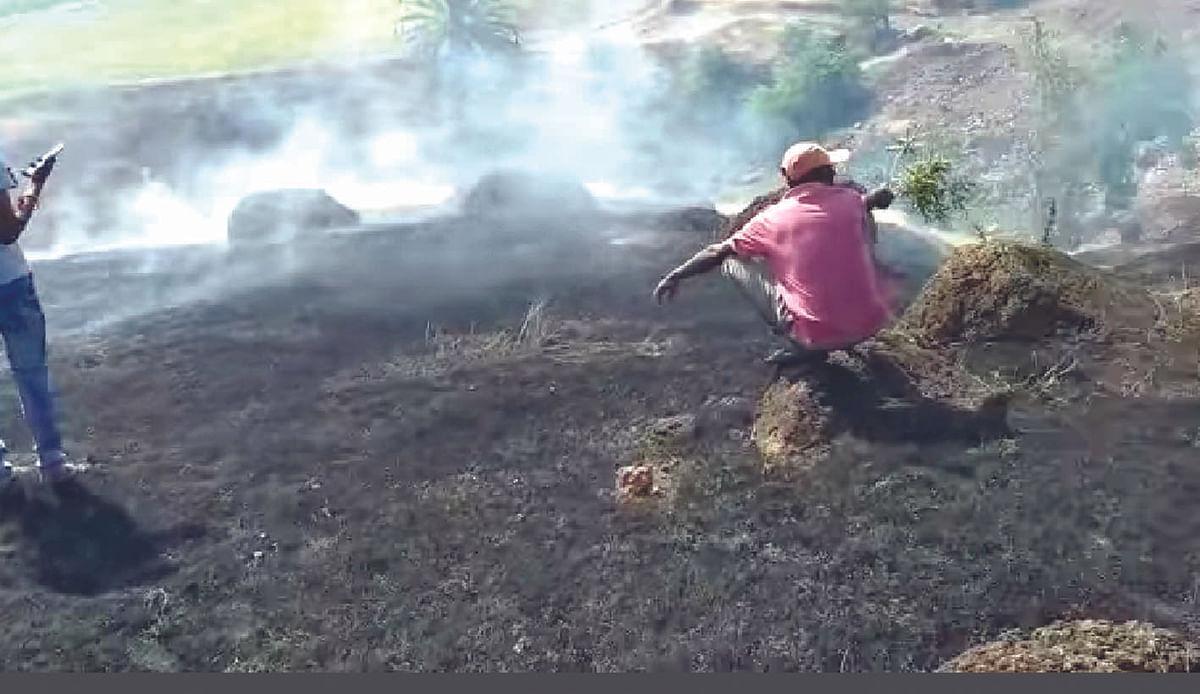 वृक्षारोपणाला समाजकंटकांनी लावली आग
