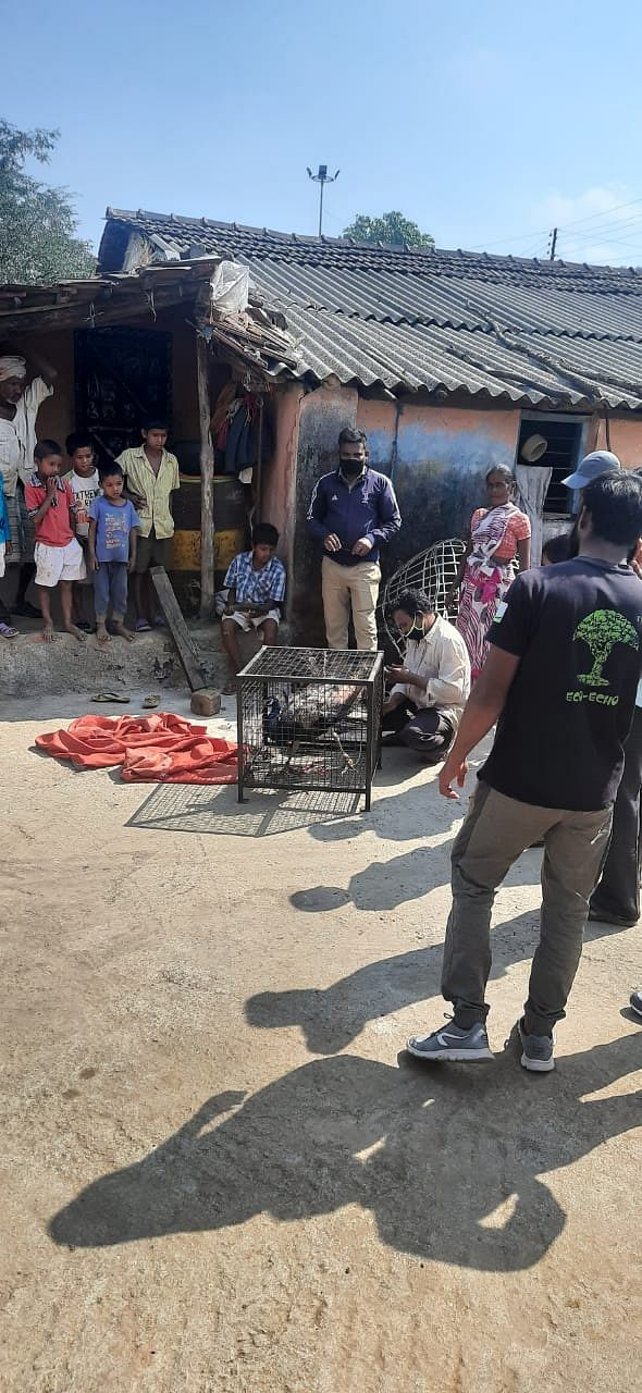 त्र्यंबकेश्वर : जखमी मोरास ग्रामस्थांकडून जीवदान