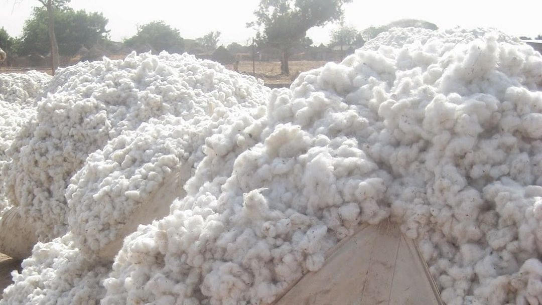 कलमाडीत बनावट वजन काट्याने शेतकर्यांची फसवणूक