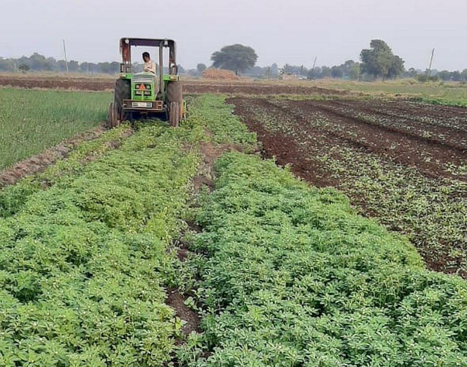 निफाड : भाव घसरल्याने शेतकर्याने मेथीवर फिरवला नांगर