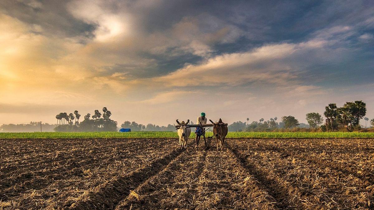 शेतकरी प्रोत्साहन अनुदानाच्या प्रतीक्षेत