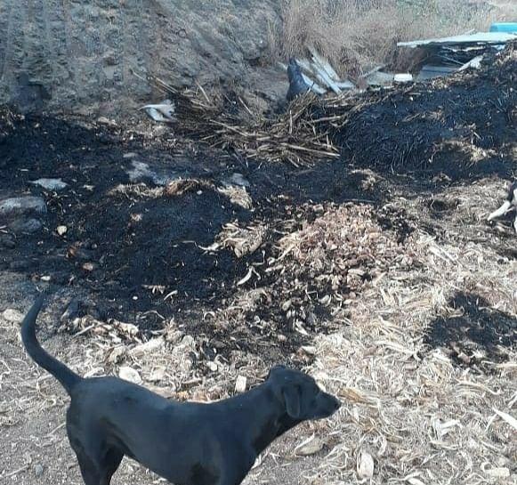 सिन्नर : पिल्लांना वाचवण्यासाठी माऊलीने घेतली आगीत झेप