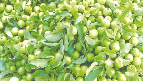 पेरूचे बाजार गडगडले, शेतकरी आर्थिक अडचणीत