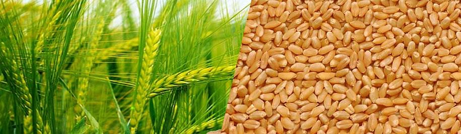 शेतकऱ्यांसाठी आनंदाची बातमी : बियाणे मिळणार अनुदानावर