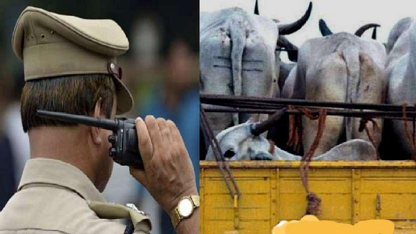 जनावरांची अवैध वाहतूक प्रकरणी दोघांना अटक