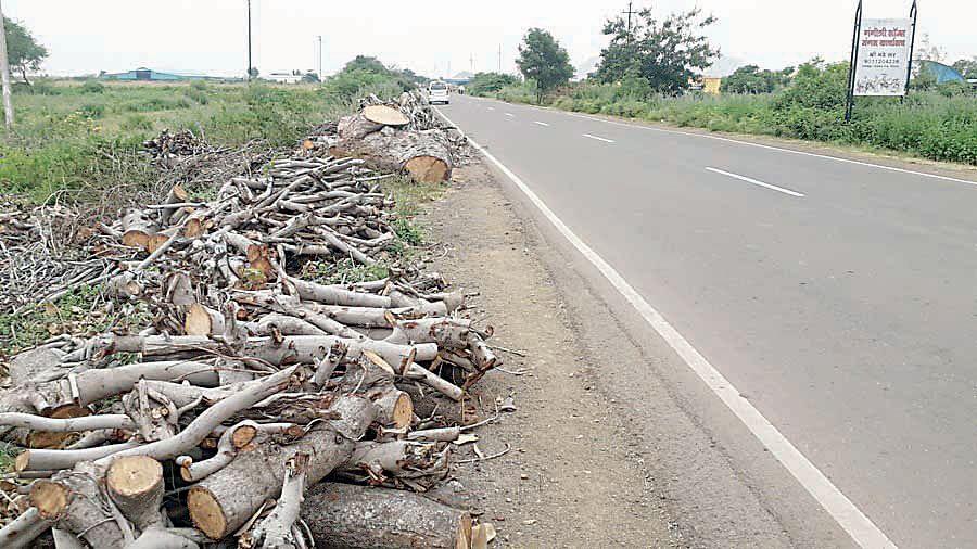 रस्ता चौपदरीकरणासाठी वृक्षांची अमर्याद कत्तल