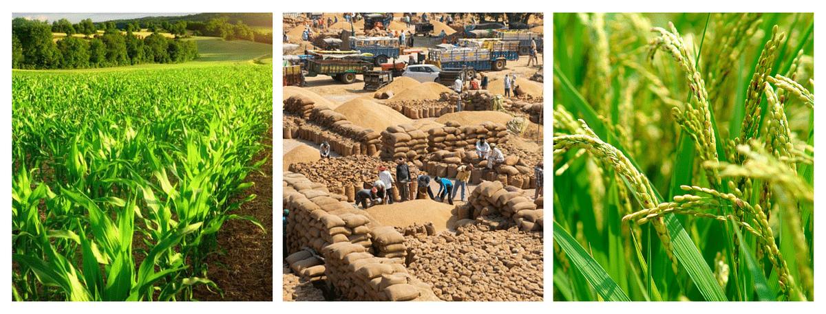 बाजार, स्वरूप अन् कृषी क्षेत्रातील समस्या