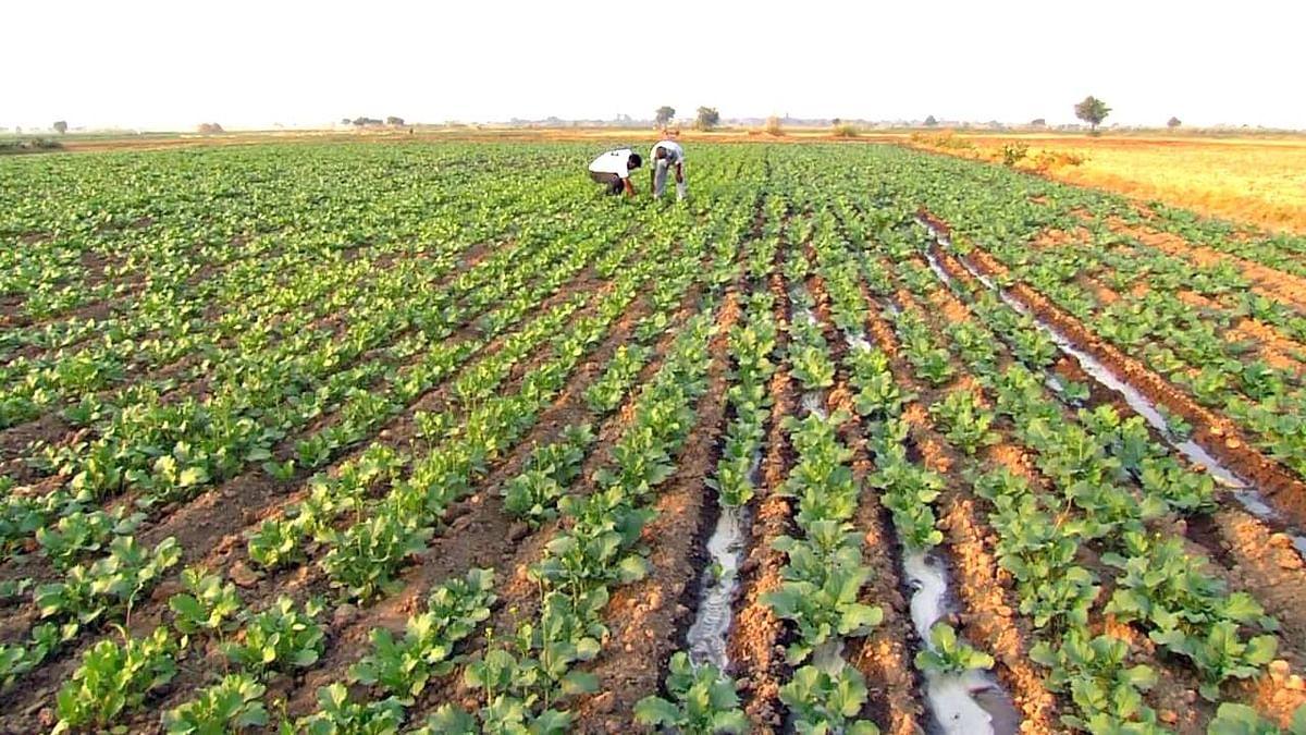 शेतीसह सहकार क्षेत्राच्या विकासावर भर