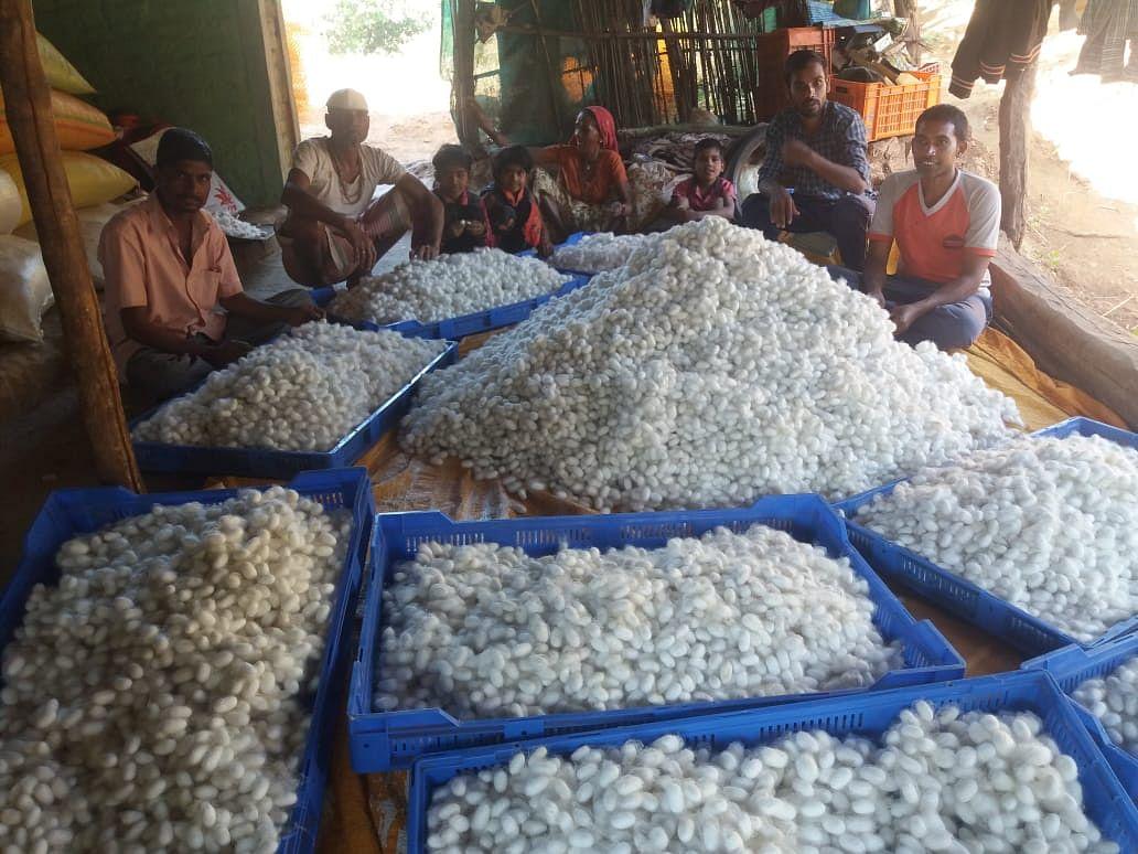 यशोगाथा २०२० : लॉकडाऊनमधील रेशीम शेतीचा 'यशस्वी' प्रयोग