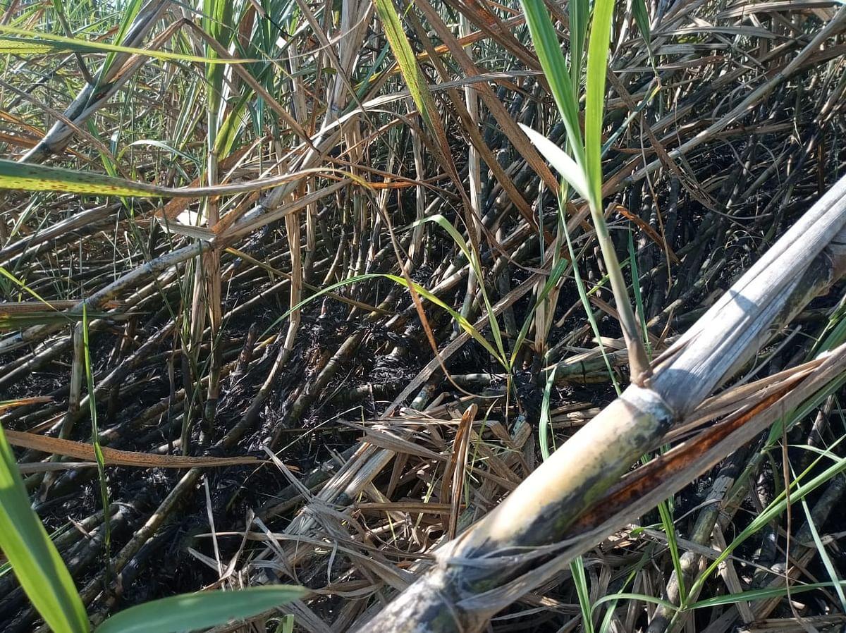 Fire destroys sugarcane crop worth in lakhs