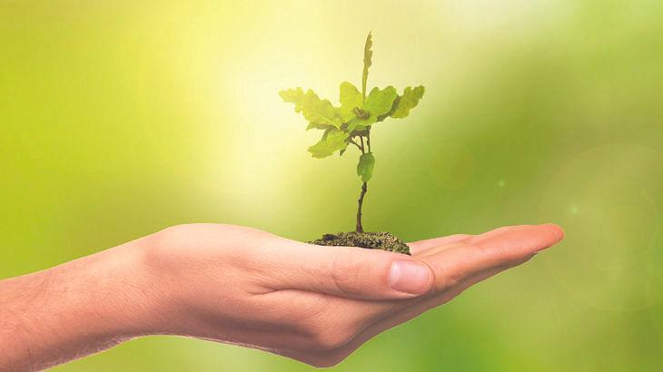 जन्म नक्षत्रानुसार कोणती झाडे लावावी ?