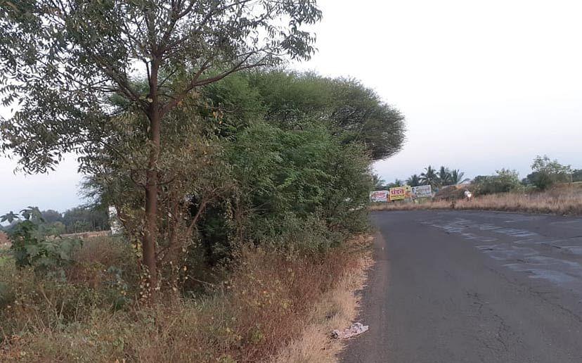 नाशिक-औरंगाबाद महामार्गाला काटेरी झुडपांचा विळखा