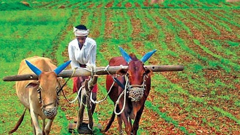 वर्ष सरले पण...नाही सरल्या शेतकर्यांच्या वेदना!