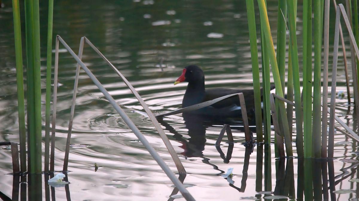 Photo Gallery  : नाशिकच्या 'भरतपूरात' पक्ष्यांचा कुंभमेळा