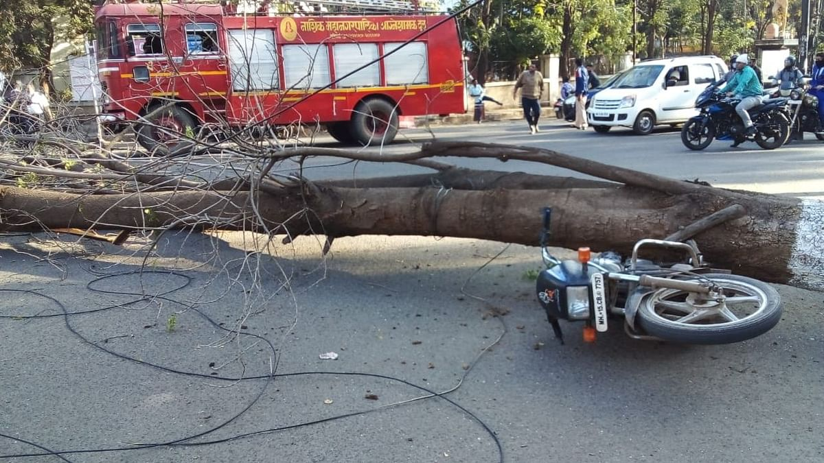 धावत्या दुचाकीवर अचानक कोसळले झाड; बालंबाल बचावला दुचाकीस्वार