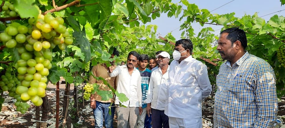 Make immediate assessment of crop damage
