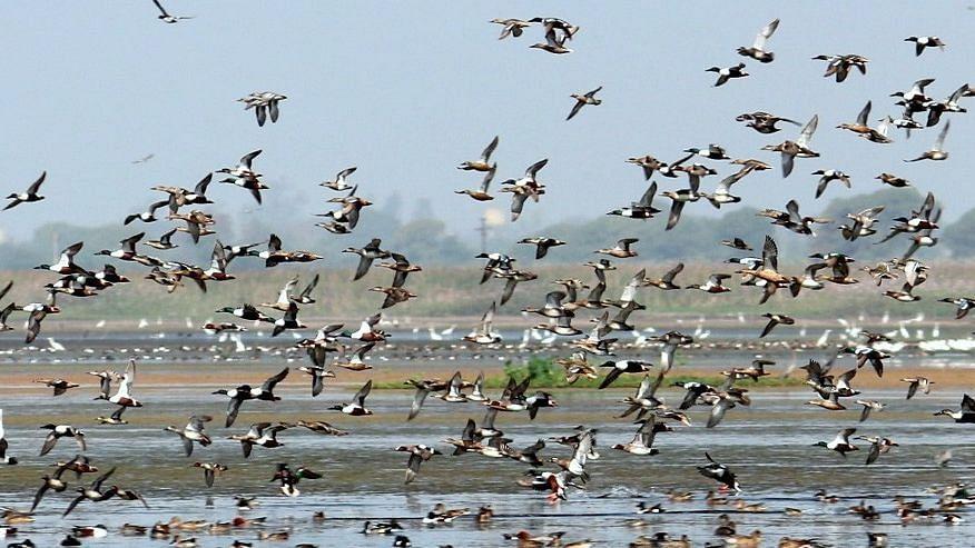 Bird Sanctuary on alert ahead of bird flu threat