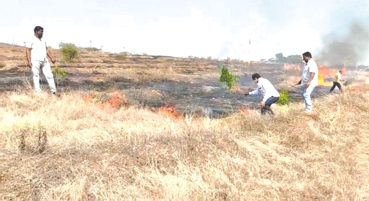 जंगलास आग लागून हजारो वृक्ष बेचिराख