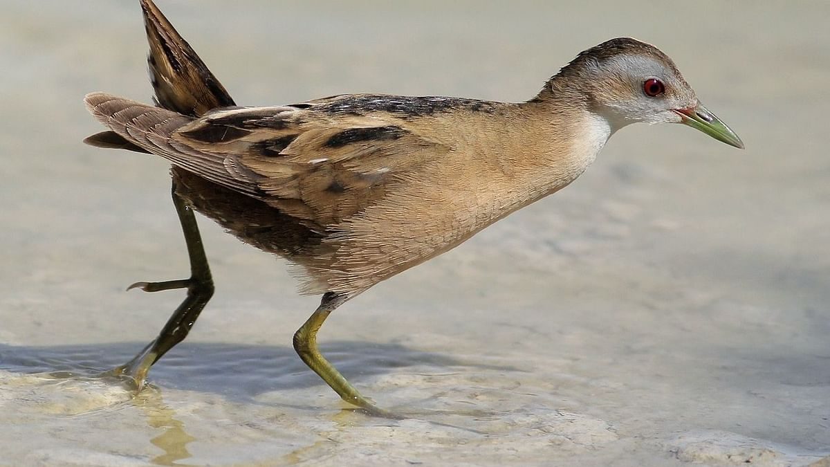 Over 2,000 birds to be culled